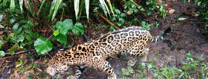 Belize Zoo is one of All Time Favorites.