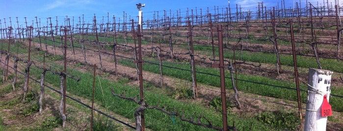 Clos Pepe Estate Winery is one of Santa Barbara Wineries.