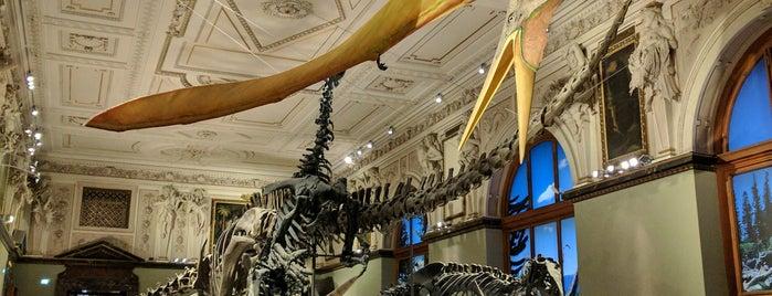 Museo di Storia Naturale is one of Posti che sono piaciuti a Taras.