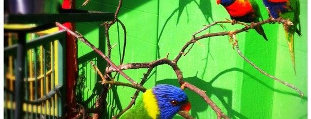The Oklahoma City Zoo is one of Allied Arts OKCityCard Partners.
