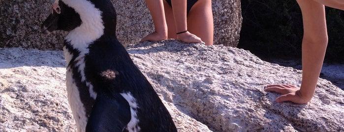 Boulders Beach is one of Tsamina mina waka waka eh eh.