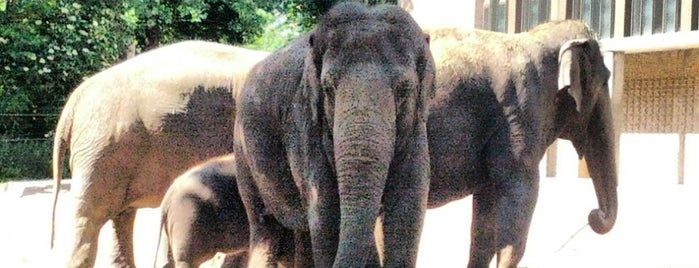 Elefantenhaus | Zoo Berlin is one of Tempat yang Disukai Sevil.