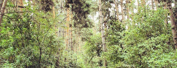 Козлин camping is one of Полесье.