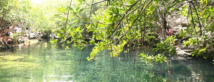 Cenote Cristalino is one of Panna'nın Beğendiği Mekanlar.