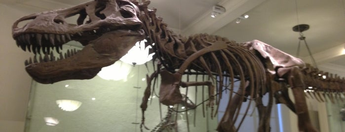 Museo Americano de Historia Natural is one of NEW YORK CITY : Manhattan in 10 days! #NYC enjoy.