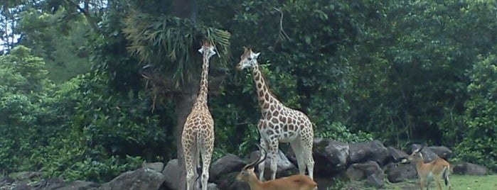 Taman Safari Indonesia II is one of Entertainment.