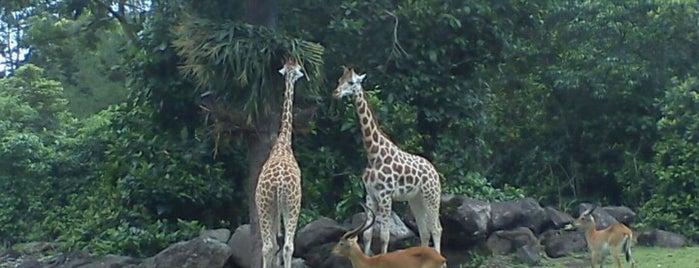 Taman Safari Indonesia II is one of Surabaya.