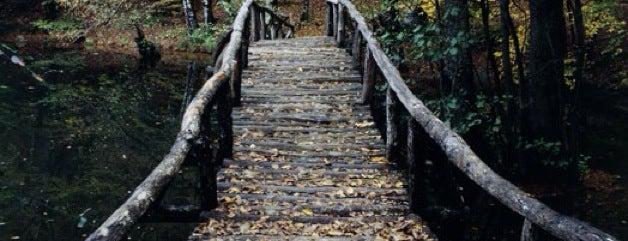 Yedigöller Milli Parkı Yolu is one of Bolu & Düzce.