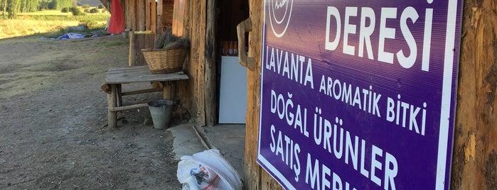 Lavanta Deresi Akçaköy is one of Akdeniz Bolgesi.