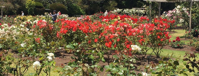 Parnell Rose Gardens is one of Auckland Trip.