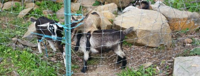 Georges Mill Farm is one of Posti salvati di Rachel.