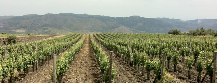 Etna Wine Passo Pisciaro is one of Wine World.