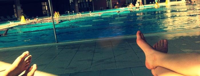 TSK Spor Okulu Yüzme Havuzu is one of Spor araştırma.