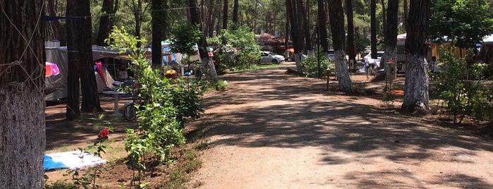 Aktur Camping is one of Locais curtidos por Altan.