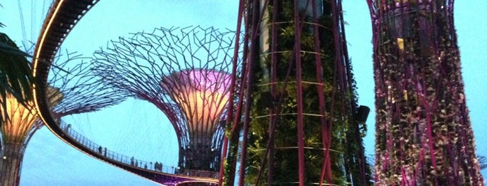 Supertree Grove is one of Singapore.