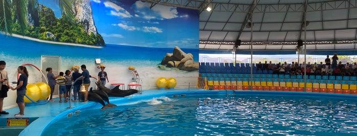 Dolphins Bay Nemo Phuket is one of Yapılacak Şeyler.