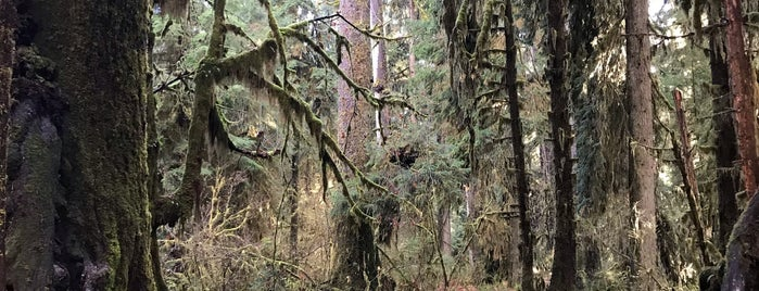 Hall Of Mosses is one of Olympic National Park 💚.