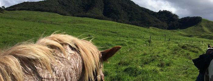 Kahua Ranch is one of Kona.