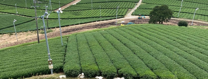 Yame Chuo Tea Gardens is one of Fukuoka.