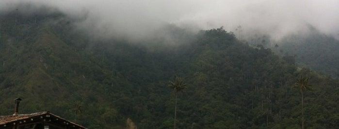Bosques De Cocora Donde Juan B is one of Lieux qui ont plu à Ioana.