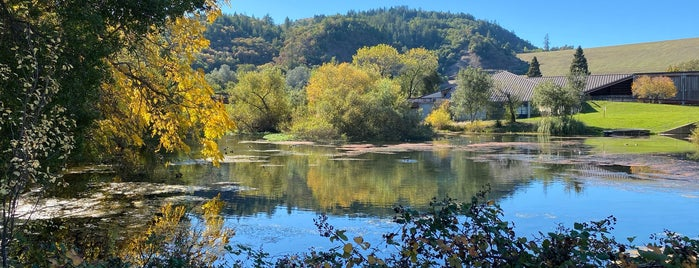 Lake Sonoma Recreation Area is one of Occidental Trip.