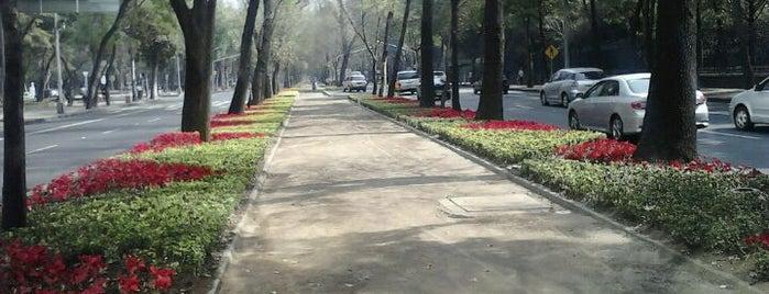 Av. Paseo de la Reforma is one of Los mejores lugares para correr en el DF.