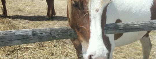 Chincoteague Pony Centre is one of Chincoteague.