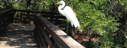 Wakodahatchee Wetlands is one of Kids love South Florida.