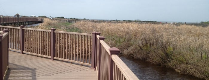 South Padre Island Birding & Nature Center is one of Elenaさんのお気に入りスポット.