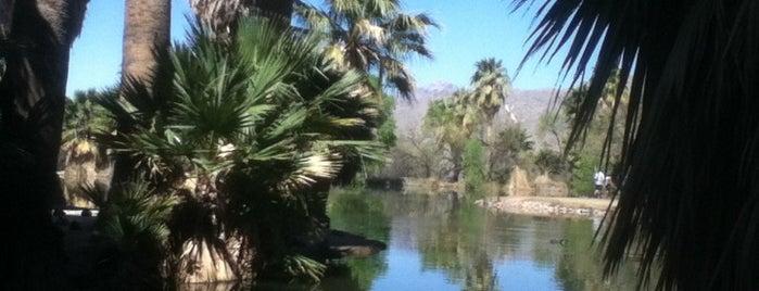 Roy P. Drachman Agua Caliente Regional Park is one of Tempat yang Disukai M.