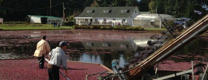 Cranberry Museum is one of Honeymoon.