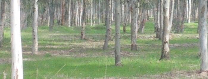 Sasalı Kent Ormanı ve Piknik Alanı is one of izmir.