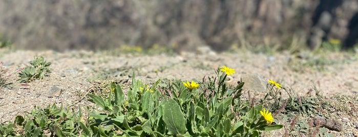 جبل الوادي الأخضر is one of Taief.