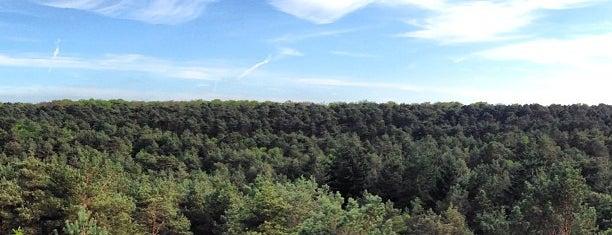 Forêt de Fontainebleau is one of Bienvenue en France !.