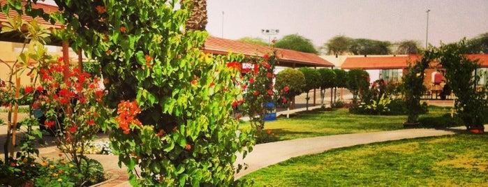PYP at King Saud University   جامعة الملك سعود - السنة التحضيرية (المسار العلمي والصحي) is one of สถานที่ที่ Muneera ถูกใจ.