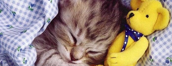 Сладкие сны is one of Favorite Cats.