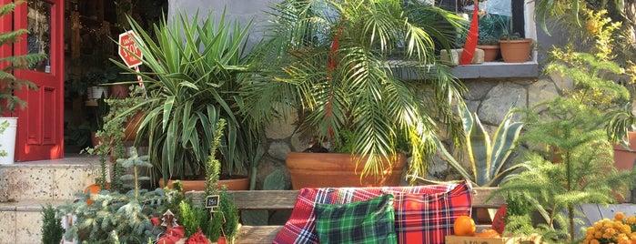 Plantsta Botanik & Cafe is one of izmir.