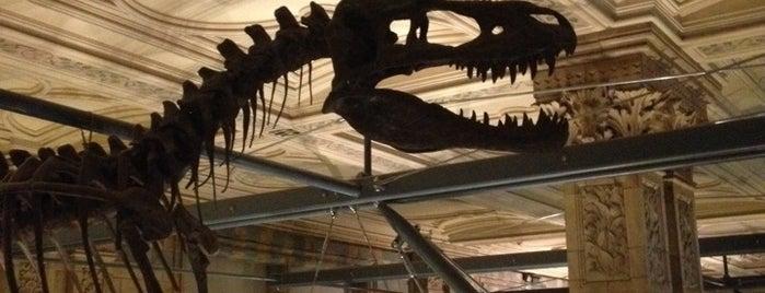 Musée d'Histoire Naturelle de Londres is one of London.
