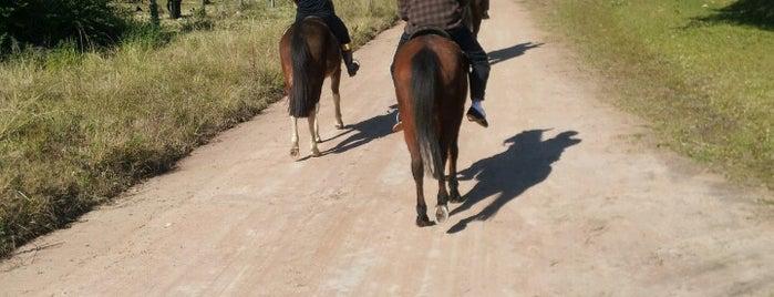 Escolinha de equitação do Tio Nelson is one of สถานที่ที่ Gabriel ถูกใจ.