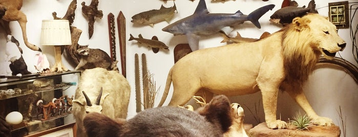 Cypress Hills Taxidermy is one of Adventures.