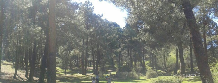 EXCURSIONES SIERRA MADRID