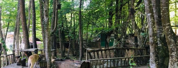 Hindiba Doğa Evi / Hindiba Nature House is one of Kalınacak Yerler.