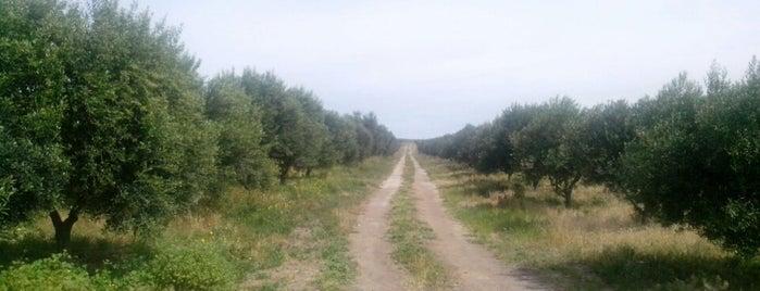olivos patagonicos is one of Orte, die Horacio A. gefallen.