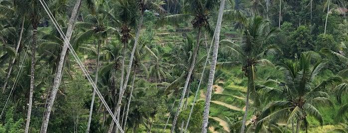 Dewari Swing is one of Indonesia 🇮🇩.