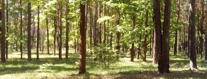 Ліс на Червоному хуторі is one of Lieux qui ont plu à Kateryna.