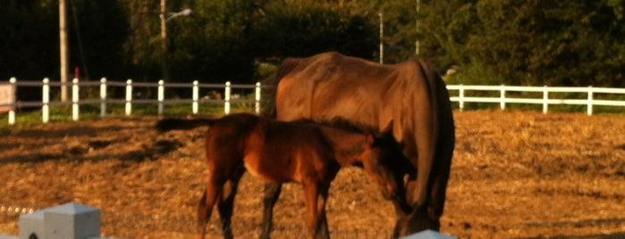 Royal Saddle Equestrian Society is one of Tempat yang Disimpan Jae Eun.