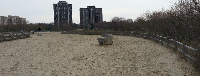 Toronto Off-Leash Dog Parks