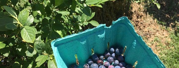 Blueberry Gardens is one of Rashu-2017.