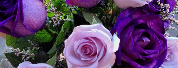 Moe's flowers is one of Orte, die _ gefallen.