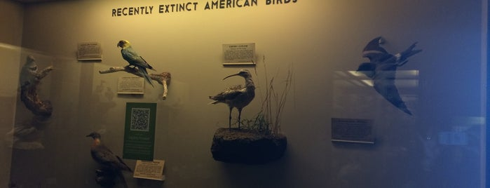 Museo Field de Historia Natural is one of Lugares favoritos de Erika.
